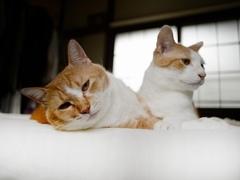 飛びついては、頭を舐め回している #逗子猫日記
