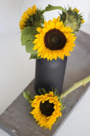 170907_flower_top_01.jpg