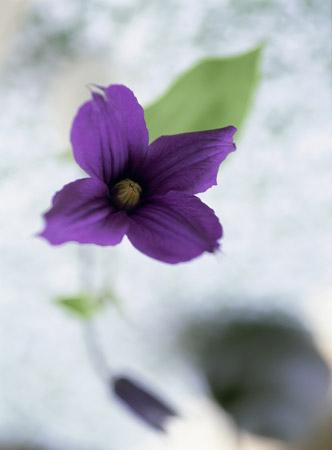 170907_flower_top_02.jpg