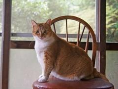 少なめのご飯に不満げな顔 #逗子猫日記