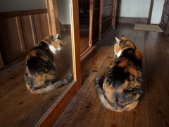 何度試みても全く興味を示さない #逗子猫日記