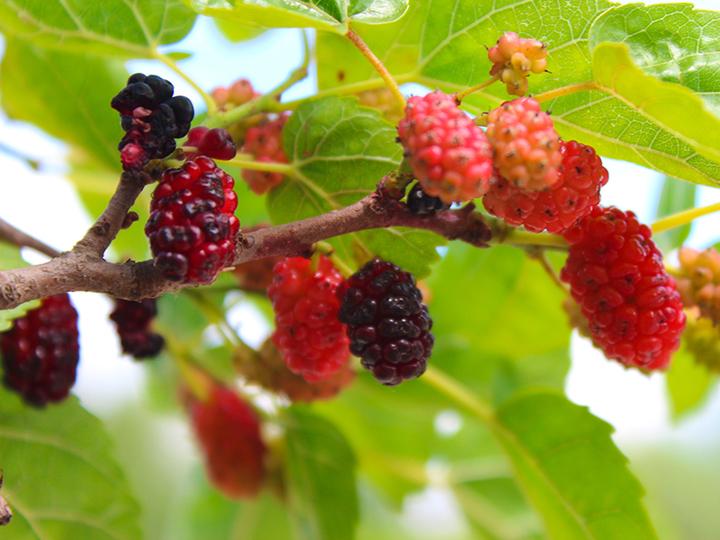 食欲の秋、おいしいものを楽しむための心強い味方