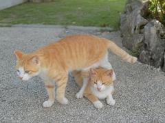 プライベートで沖縄を旅した #逗子猫日記