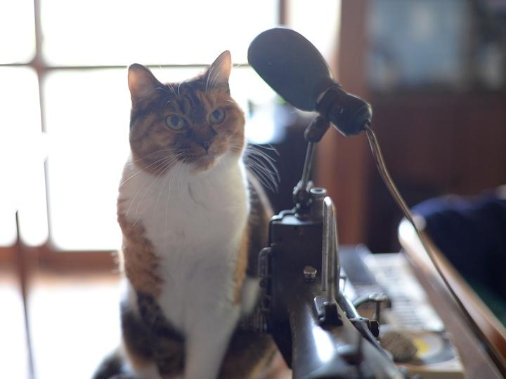 前向きな話だと時間はあっという間 #逗子猫日記
