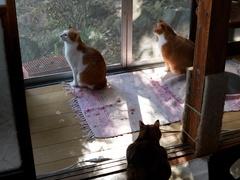 一斉に縁側に集まってきた #逗子猫日記