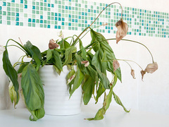 部屋の鉢植えが枯れてしまう4つの原因とその対策