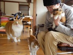 なんと今回で100回目! #逗子猫日記