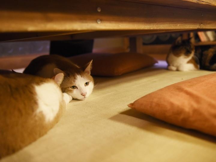単純な猫軍団はだんまり #逗子猫日記