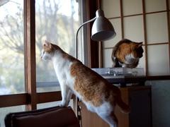 この家の主は自分ではなく猫軍団 #逗子猫日記