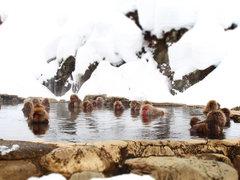 世界で唯一温泉に入るニホンザルを間近で見られる場所へ