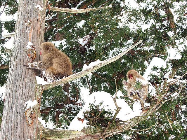 20171228_monkey8.jpg
