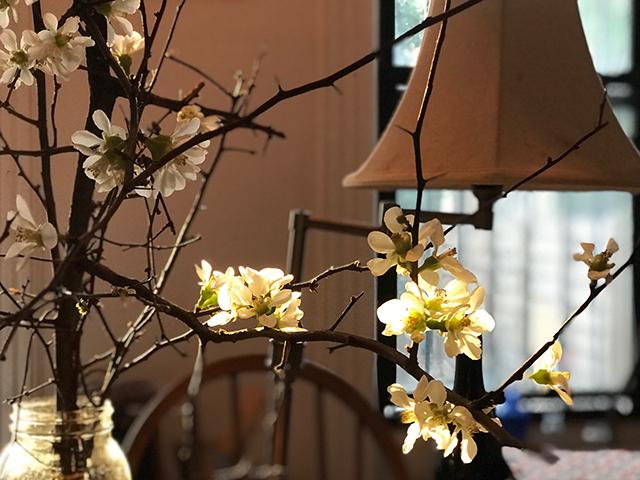20170117_image_sakura