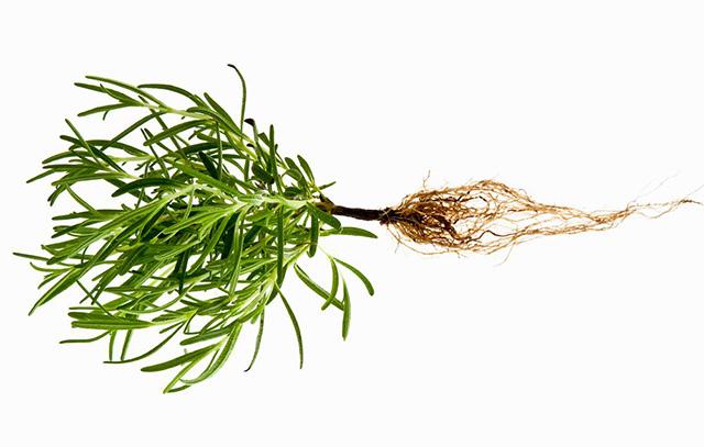 20180124_Easiest-Herbs_1