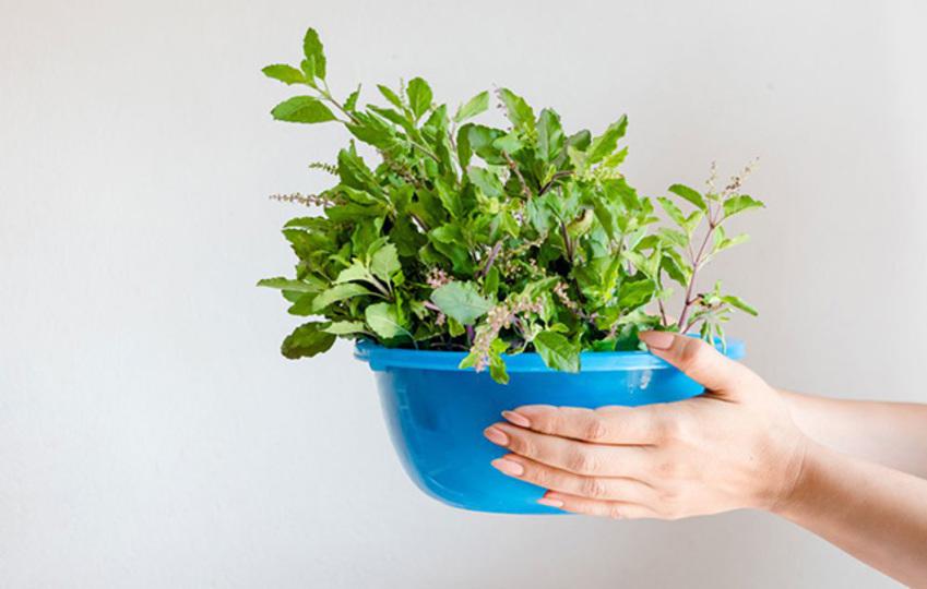 20180124_Easiest-Herbs_2