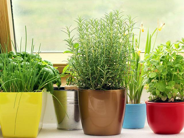20180124_Easiest-Herbs_top