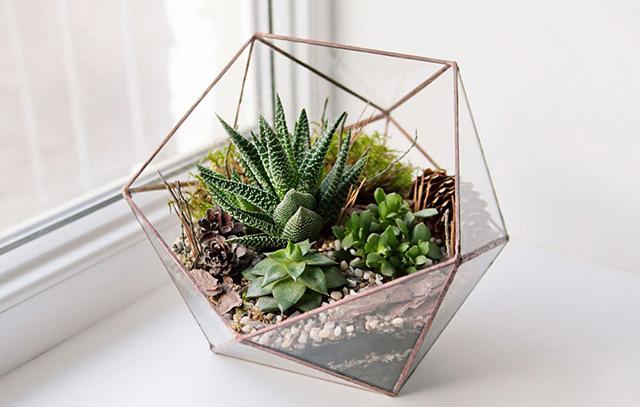 20180124_succulents_4