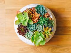 多肉植物をすぐ枯らしてしまう人がやりがちな5つの間違い