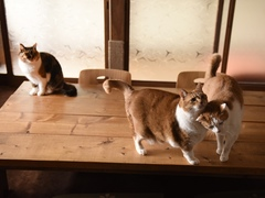 猫ってどんな存在なのでしょうか #逗子猫日記