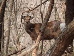 命に想いをはせる。「むかわのジビエ」の愛ある鹿肉