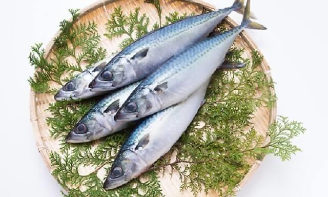 1803_mackerel_02