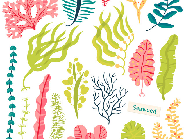1804_seaweed_01
