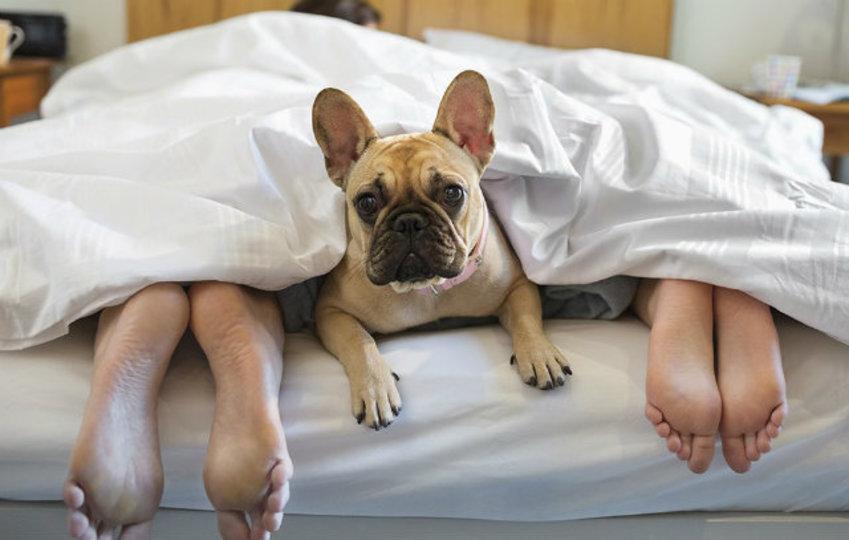 睡眠に悩むなら。研究で証明されたよく眠るための秘訣5つ
