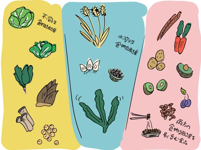 食物繊維を含んだ食品を紹介するイラスト
