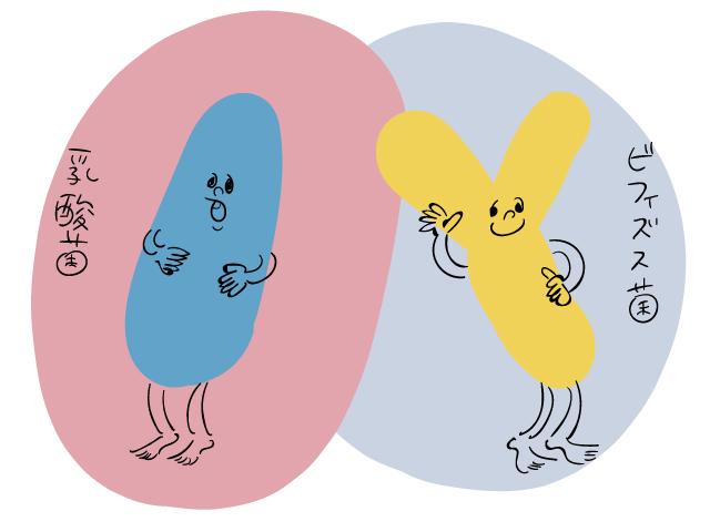 乳酸菌とビフィズス菌を表すイラスト
