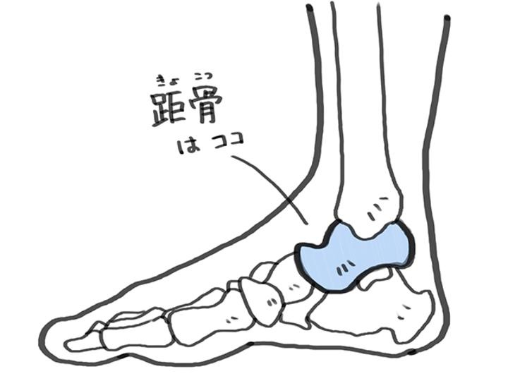 外反母趾も骨盤の歪みも。「距骨(きょこつ)」マッサージでバランス改善[前編]