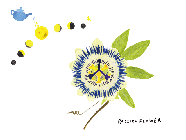 201808PASSIONFLOWER