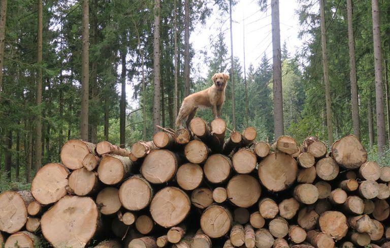 dogpoop-log-1000-1518558013