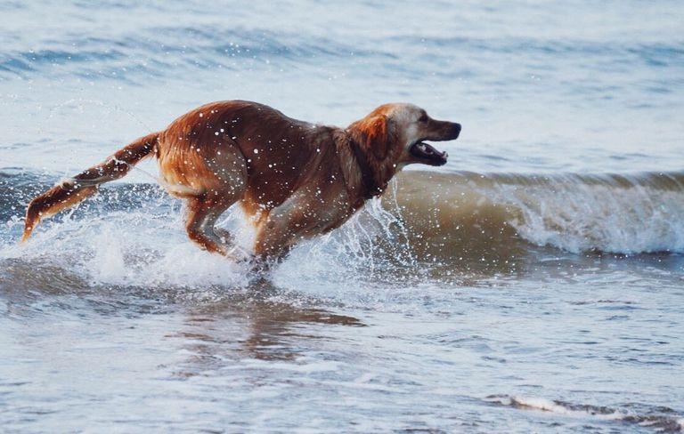 dogpoop-loose-1000-1518566339