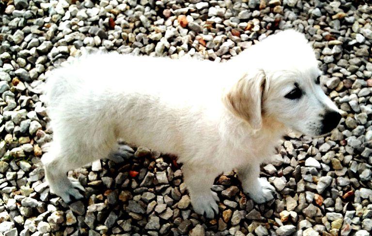 dogpoop-small-1000-1518558022