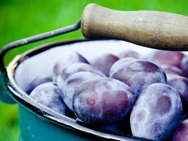 おやつ代わりに! ヘルシー&空腹になりにくい低糖フルーツ9種