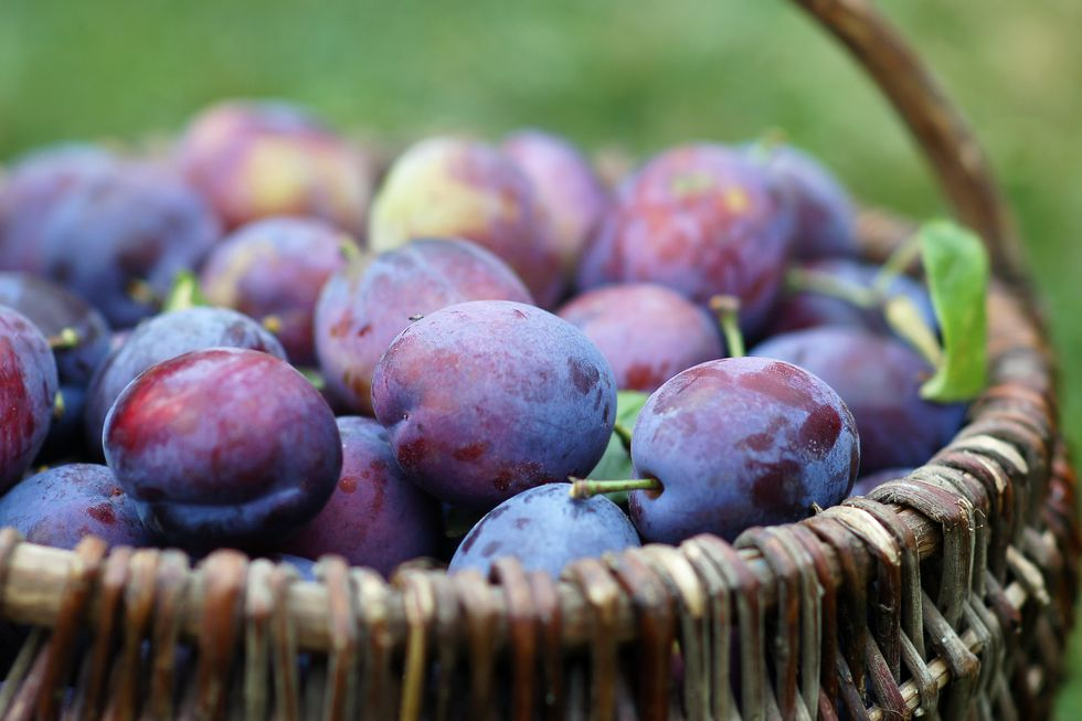 plums-in-the-basket-royalty-free-image-91736520-1536097183