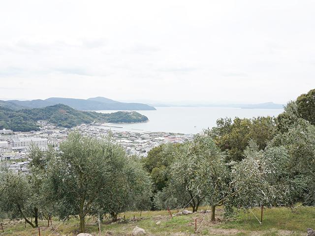olivedayo02
