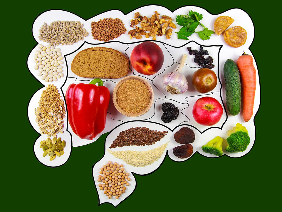腸内と野菜、果物