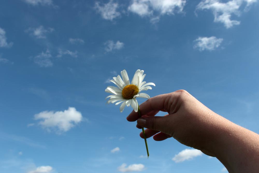花を掲げている手