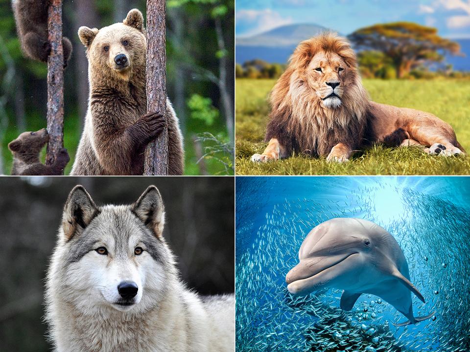 クマ、ライオン、オオカミ、イルカ