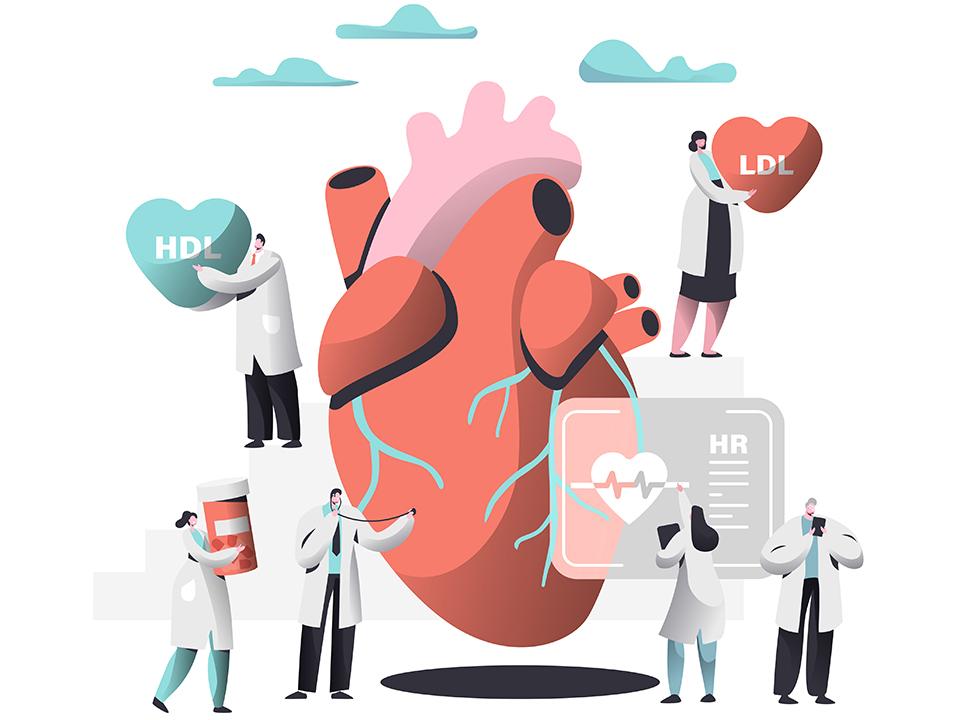 HDLコレステロールとLDLコレステロール