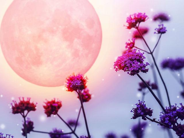 満月で輝く花