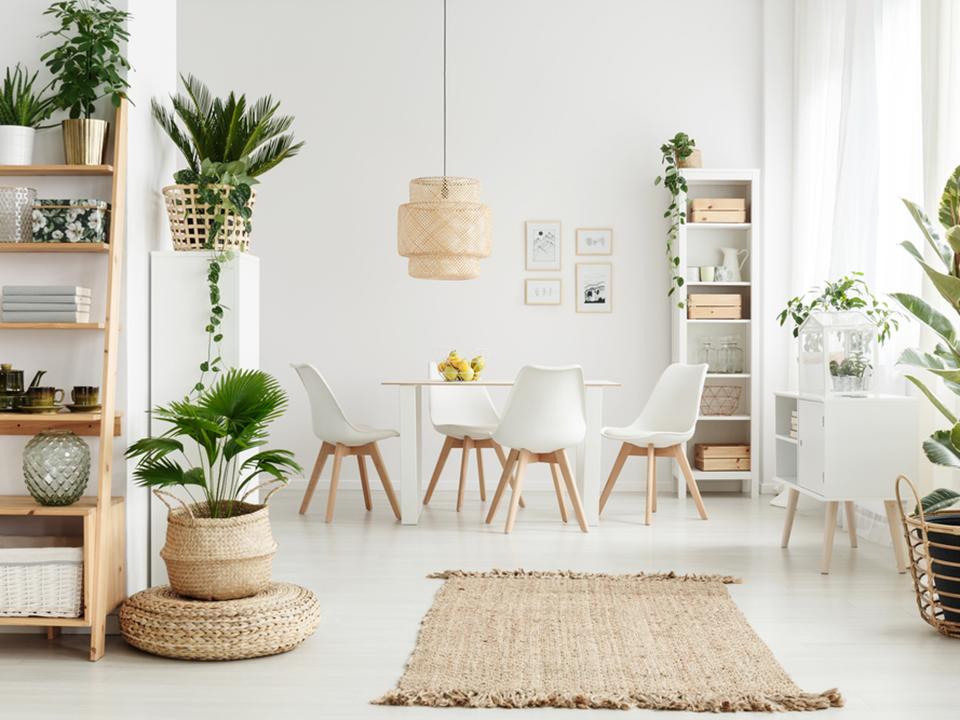 部屋と植物