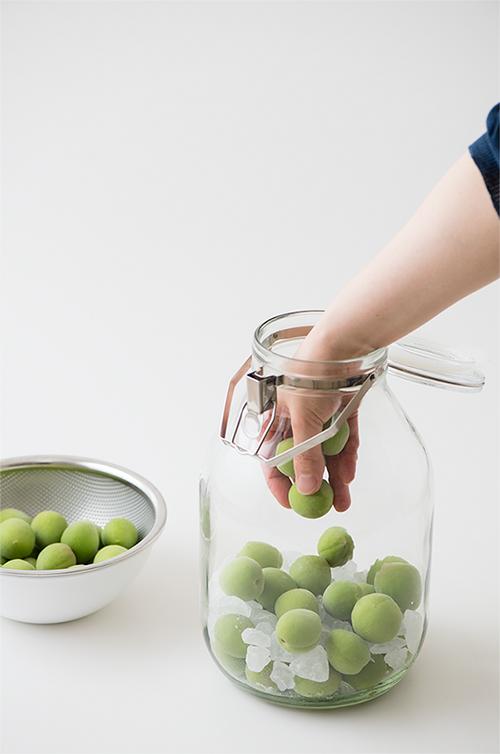 梅しごと。梅と氷砂糖を交互に漬ける