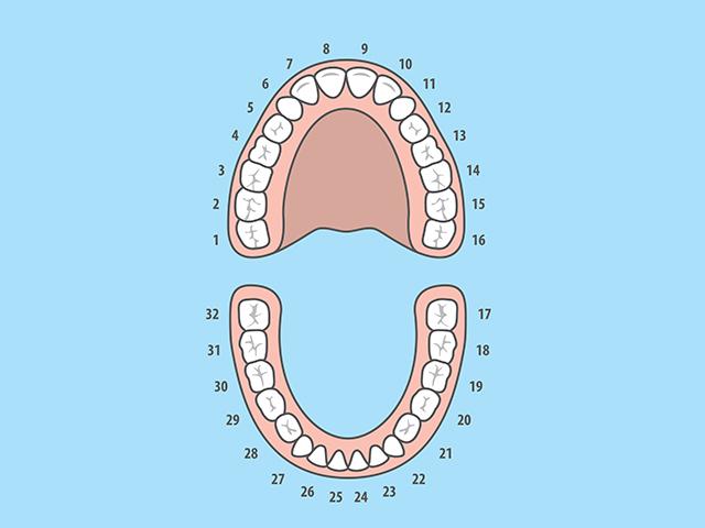 640_dentist