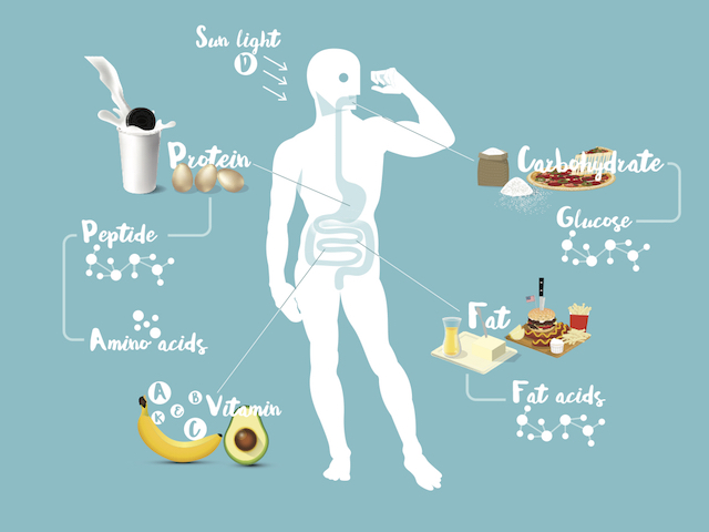 消化吸収の図