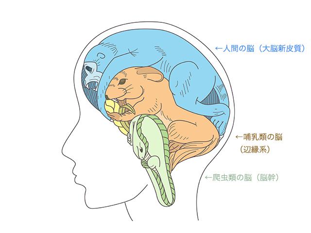 3層構造の脳
