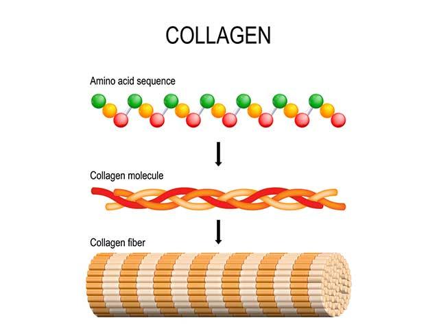 コラーゲン