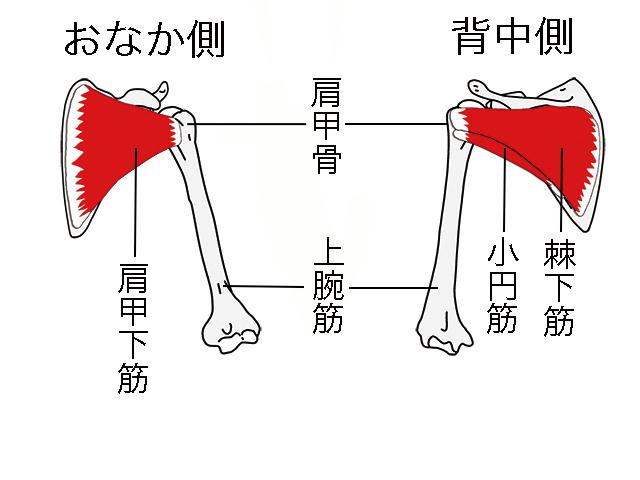 有川譲二の世界一ゆる〜い解剖学的コンディショニング