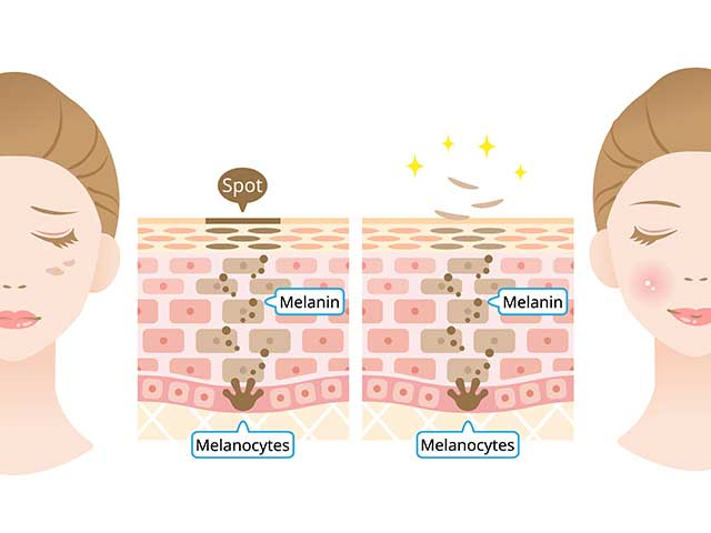肌内部の構造