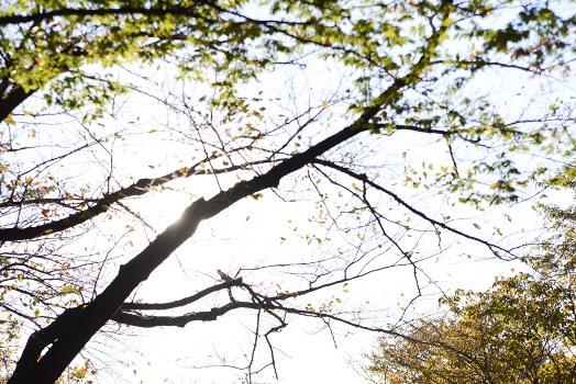 日差しが差し込む木々